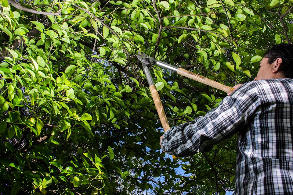 Blog for Tijeras de jardineria